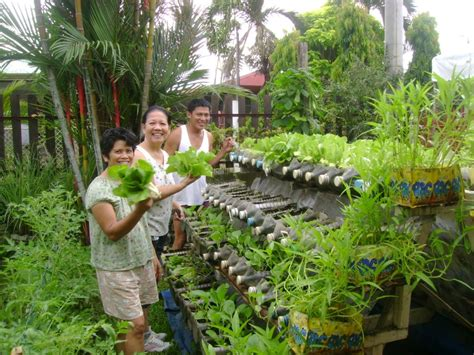 vertical vegetable gardening from recycled bottle