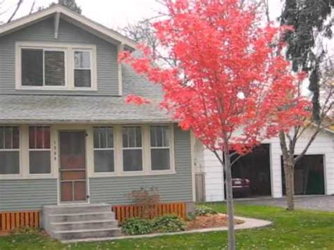 maple tree vs autumn blaze autumn blaze maple