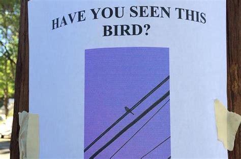 true tweets  birds     laugh