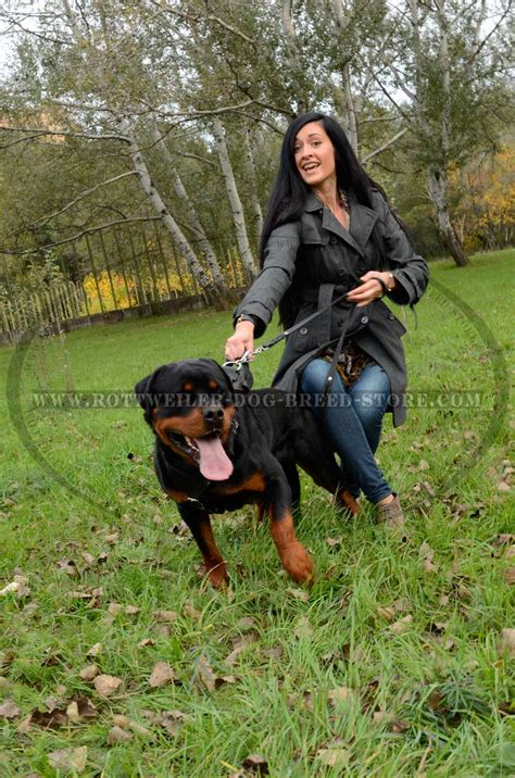how should i walk my rottweiler unique leather rottweiler harness y shaped breast plate