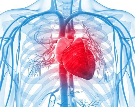 Is Jantung mengetahui letak jantung manusia serta fungsi bagian