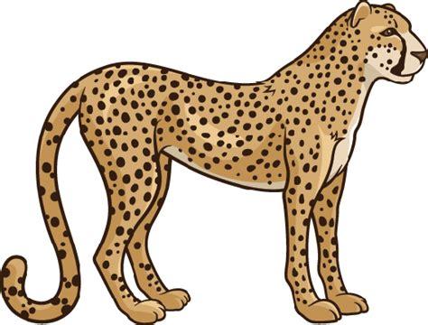 cheetah clipart cheetah clipart pbs learningmedia