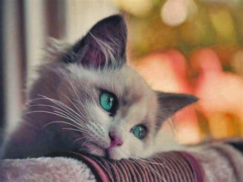 imagenes de gatos tristes con mensajes tiernas im 225 genes de gatitos tristes imagenes de tristeza