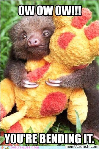 Baby Sloth Meme - sloth babies memes