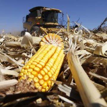 crop insurance harvest prices nailed down