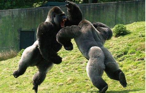 imagenes de animales fuertes cual es el animal m 225 s fuerte del mundo