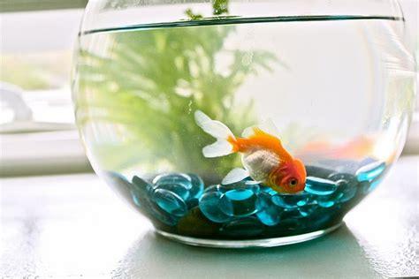 types of aquariums 302 found