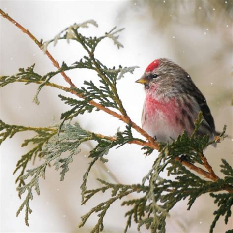 winter birds our world s view