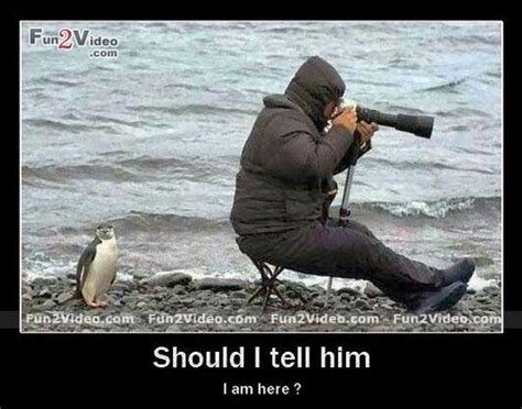 Meme Photography - likeable penguin photography funny photo