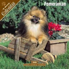 how much is pomeranian in philippines pomeranian dogs price