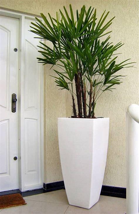 plantas  melhorar  saude da sua casa plantas