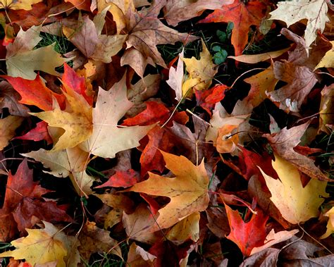 google images autumn leaves fall wallpaper galery photo celebrity