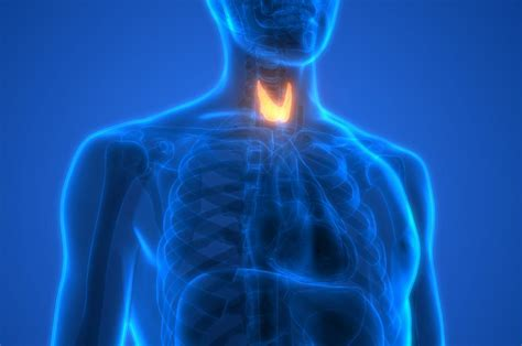 thyroid problems  cholesterol whats  link