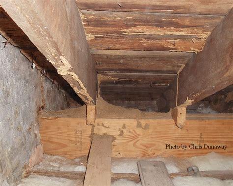 Attic Pest - termite termite nest in attic