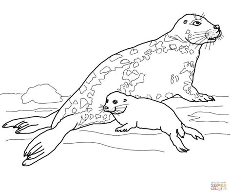 gray s anatomy coloring book free gray seal and baby coloring page free