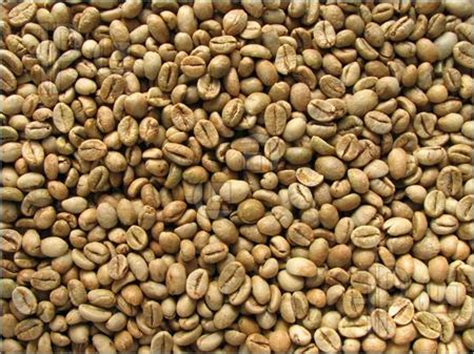 Coffee Robusta green robusta coffee beans wholesaler manufacturer exporters suppliers kerala india