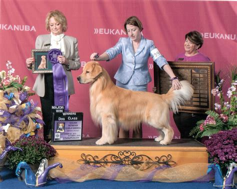 golden retriever breeders in sc golden retriever breeders near sc photo