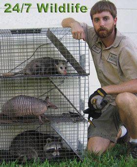 exterminators palm gardens fl boca raton exterminator pest rodent rats mice mouse