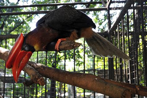 india s security concerns vs endangered bird hornbill