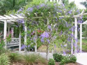 vine tropical florida gardens