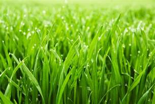 why is the grass wet in the morning wonderopolis