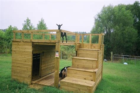 goat house 25 best ideas about goat house on pinterest goat shelter goat playground and goat pen