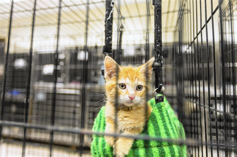 Dijamin Clear St Kitties 25 adorable kittens for adoption in ct kittens wallpapers