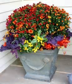 flores sol autumn planting season