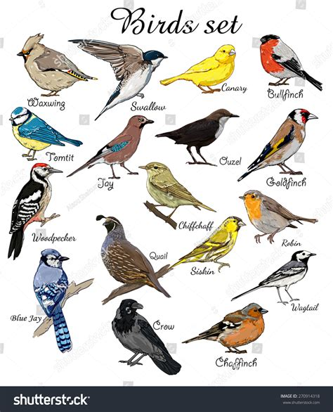 pics for gt birds with names in english