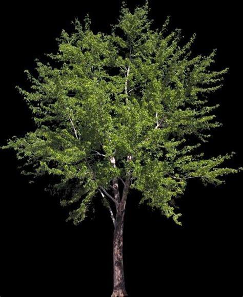div opacity tree tiff with opacity bump texture sharecg