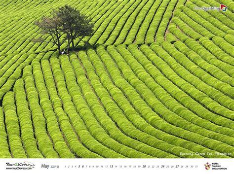 green korea wallpaper tour to south korea boseong green tea plantation south