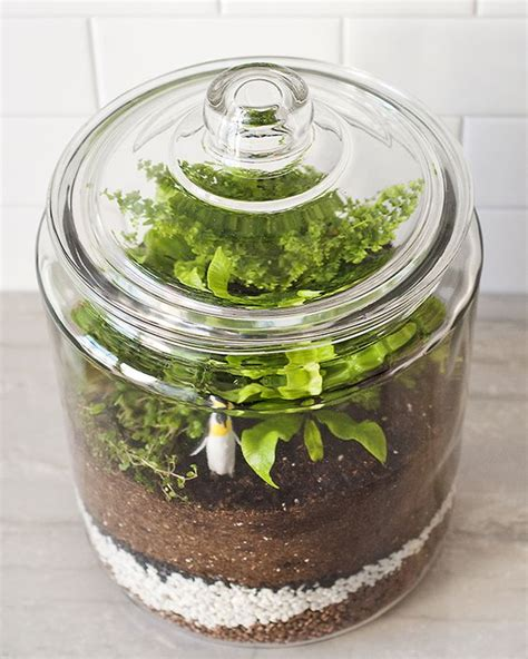 how to a jar l how to a closed terrarium l wren the plant