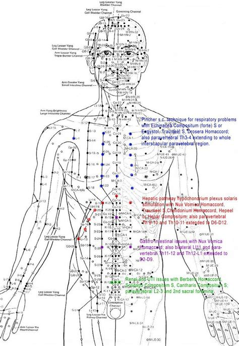 acupressure diagram of pressure points 17 best images about meridian charts on the