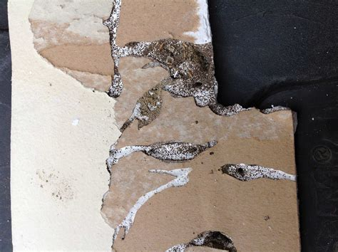 Termites Drywall Paper by How Level Ceiling Joist For Drywall