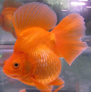 Makanan Ikan Hias Palmas pet ikan hias
