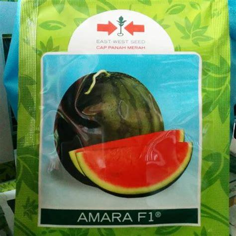 Bibit Semangka Kuning Non Biji jual benih semangka sms wa 0857 7228 0300 dadimakmur