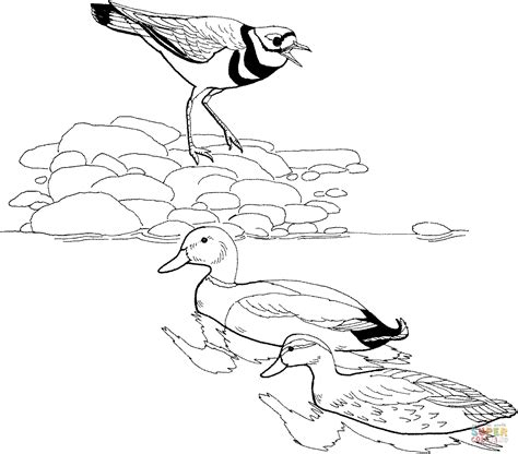 duck hatching coloring page 95 bird hatching coloring page bluebonkers easter