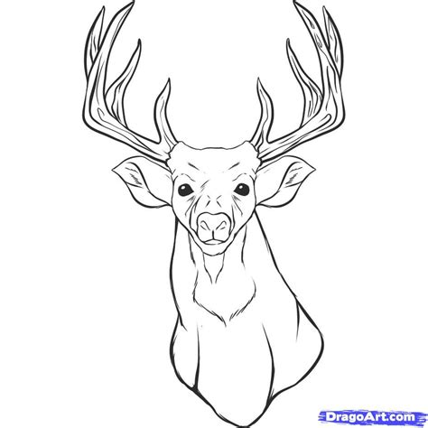 deer face coloring pages how to draw a realistic deer draw real deer step by step