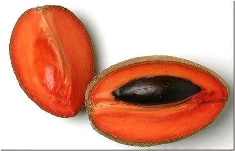 color mamey las grandiosas propiedades mamey o zapote una fruta