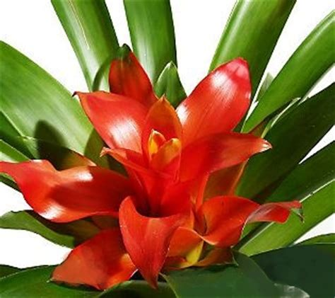 how to care for tropical house plants tropical indoor house plant care repotting house plants