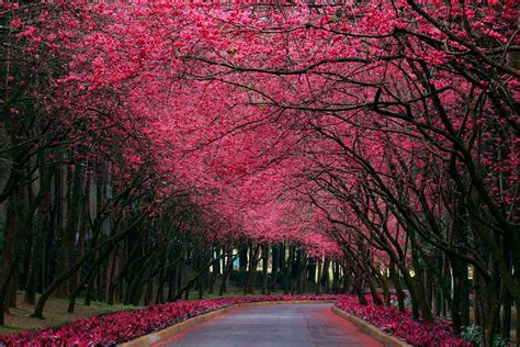 pretty trees beautiful trees photography the highlanders