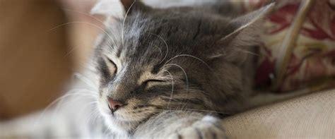 assorbente interno rimasto dentro come proteggere i gatti dal freddo petpassion