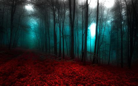 nature landscape red blue forest mist trees path