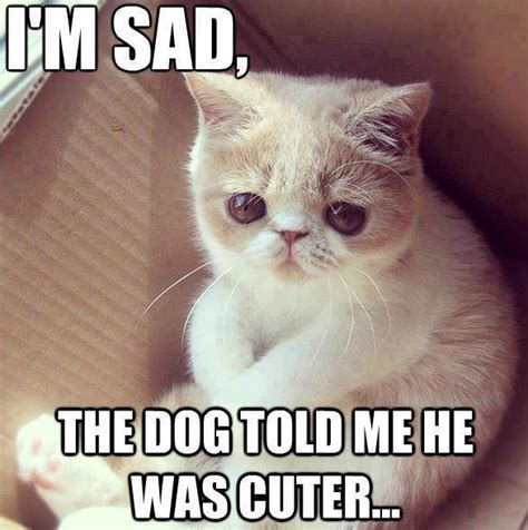 Cute Cat Meme - animal animal animal july 2013