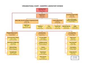 organizational chart template word best photos of organization chart template word 2010