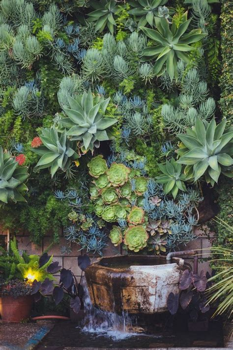 What An Amazing Living Wall Display Of Succulents Source Succulent Garden Wall