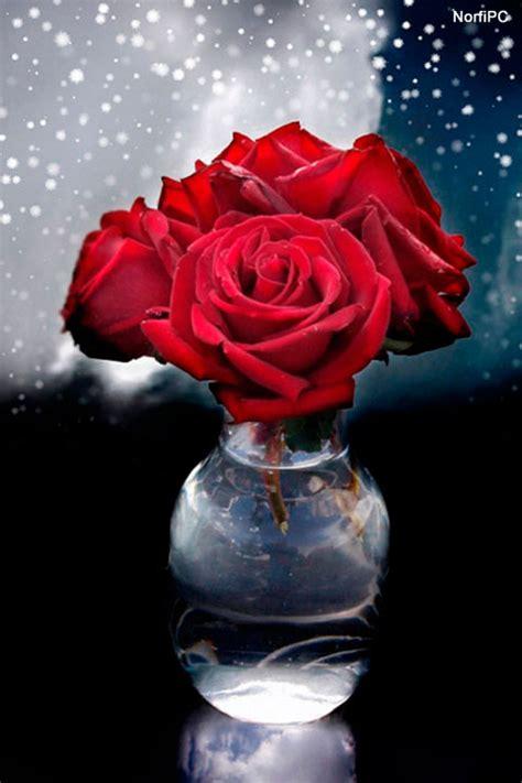 imagenes para celular de flores fondos para celular flores imagui