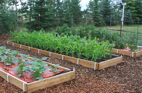 raised beds    veggie varieties