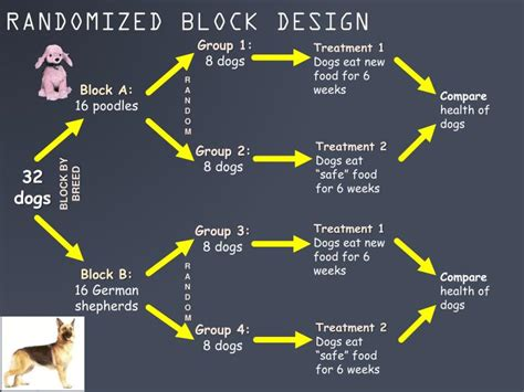 block design experiment definition ppt experiments and observational studies powerpoint