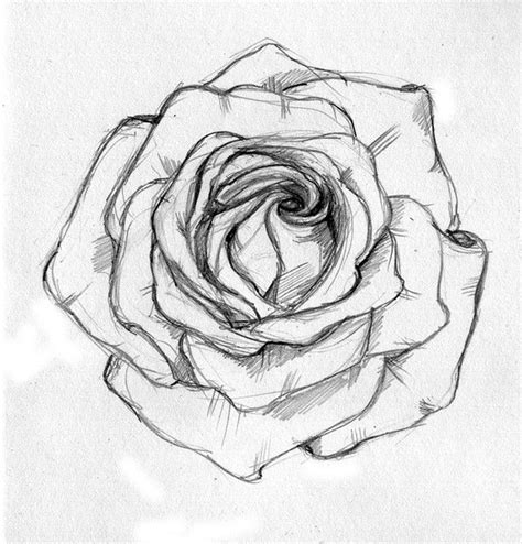 open rose tattoo best 25 sketch ideas ideas on drawings